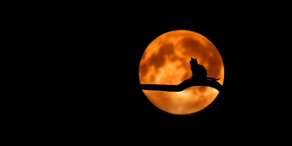 Katze-in-der-nacht