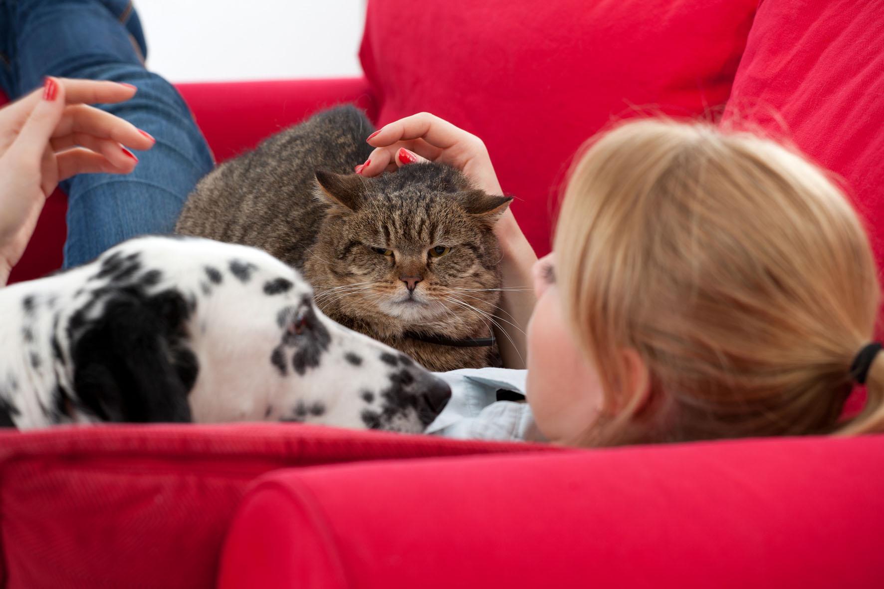 Tierhalter ihre Lieblinge und Tiergerüche