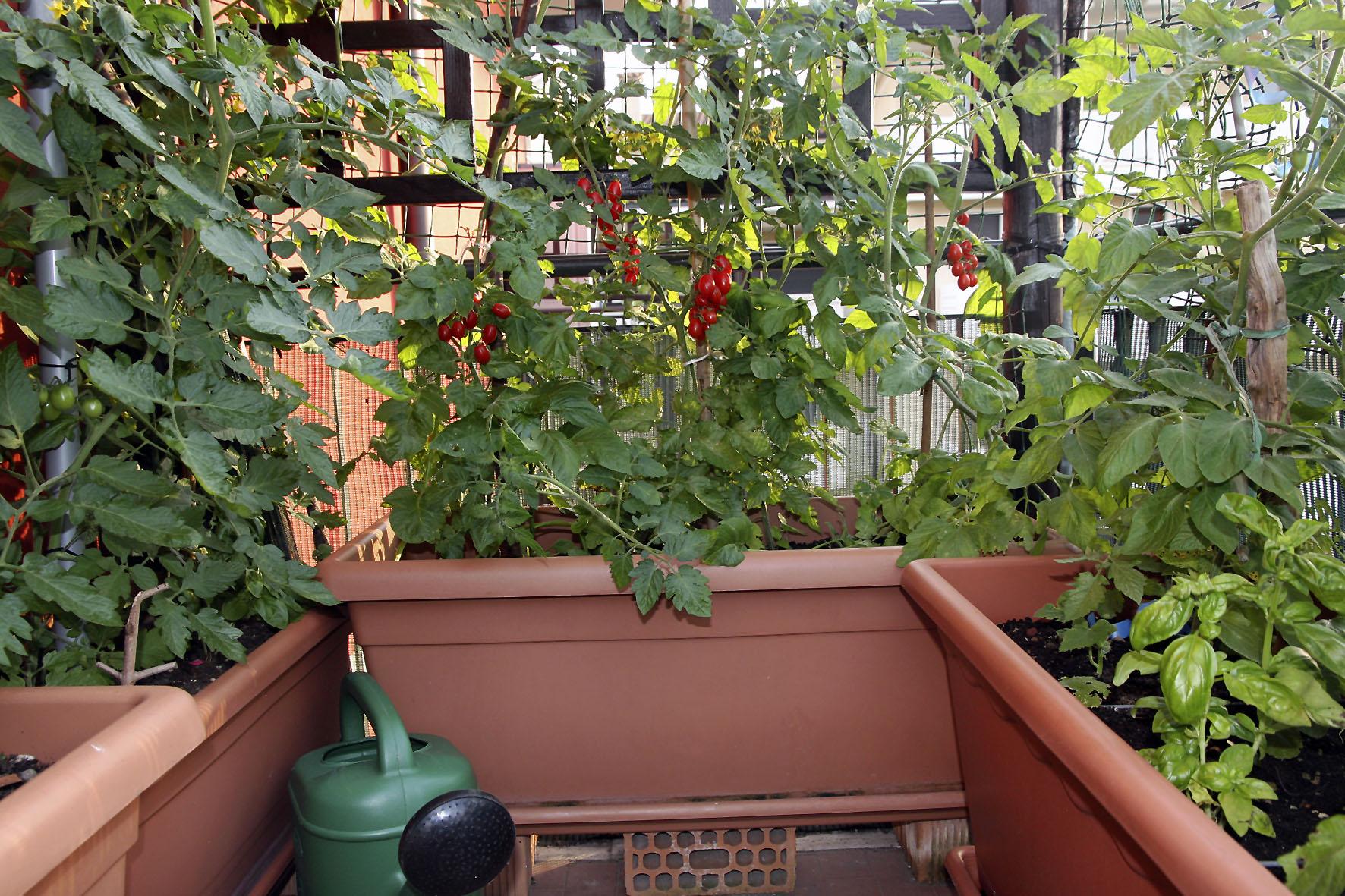 Urban Gardening - Auf kleinstem Raum Obst und Gemüse ernten
