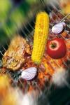 Gemüse ist auch gegrillt gesund und bringt eine bunte Vielfalt auf den Teller.