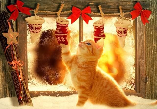 Weihnachten sogar die katze freut sich
